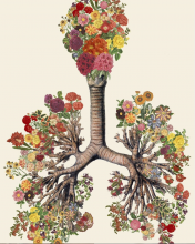 Lungs are Life